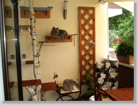 kitteninfo. Black Bedroom Furniture Sets. Home Design Ideas